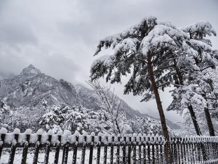 Korean pine tree under the snow and big mountains on the background. Seoraksan National Park, South Korea. Winter 2018