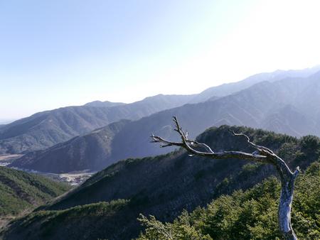 Snag and beautiful mountains Seoraksan on the background. South Korea
