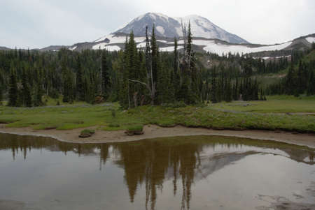 pct: lake reflection with pine trees and bright green grass Stock Photo