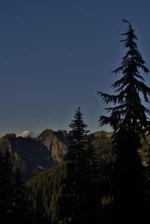 pct: pine tree silhouette