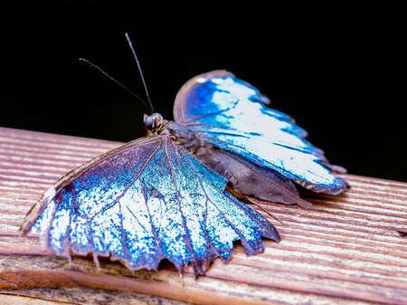 Blue butterfly Banco de Imagens