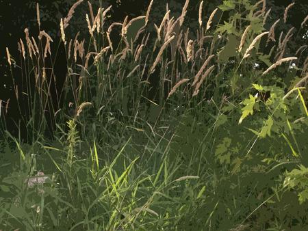 wild grass: La luz del sol cae sobre hierba