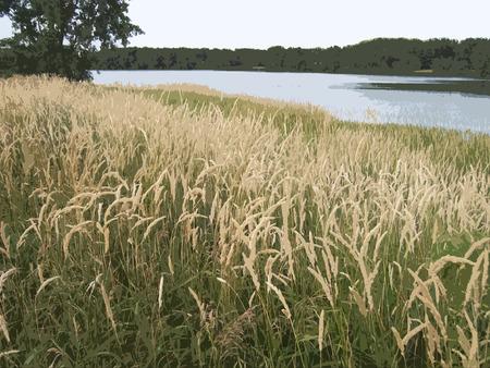 wild grass: Hierba y �rboles, con un lago cerca Vectores
