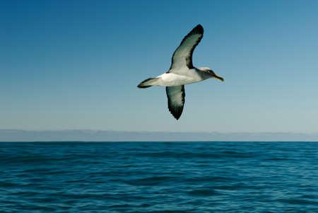 A graceful albatross against the blue sky