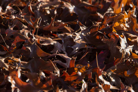 Brown and red autumn leaves Foto de archivo