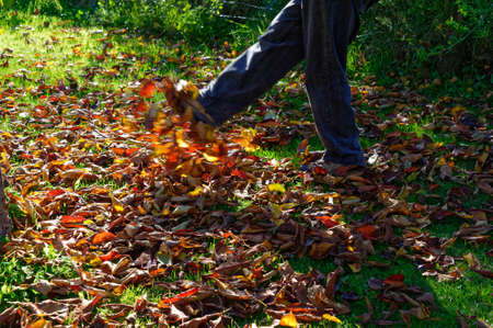 Colourful Autumn leaves being kicked showing motion Stock Photo