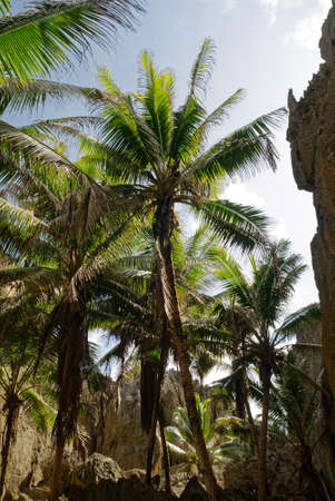 Stone walls in Togo Chasm surround coconut trees reaching for the sky