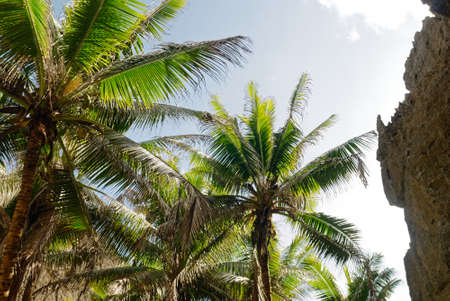 Palm trees reach up surround by the rocks of Togo Chasm Stockfoto
