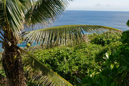 Coconut fronds in front of the sea in Niue Stockfoto