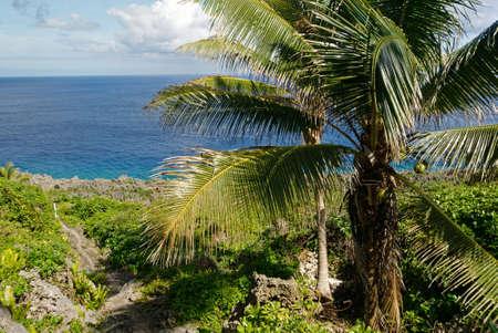 Green, lush coconut palms on the coast in Niue Stockfoto