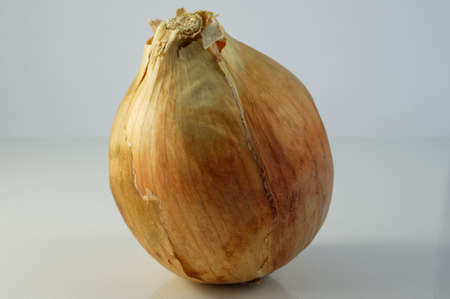 A fresh brown onion standing on its end Banco de Imagens