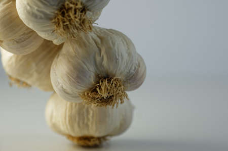 Garlic bulbs showing their papery skin and trimmed roots 版權商用圖片