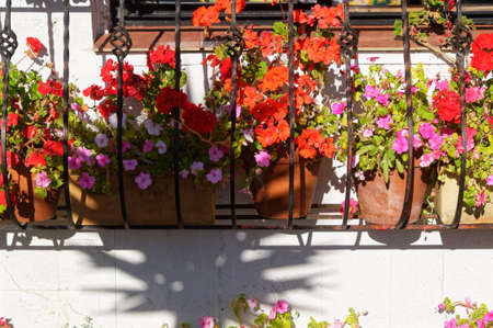 Red and pink flowers on geraniums in pots in a colourful window box