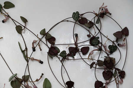 A long, tangled string of chain of hearts