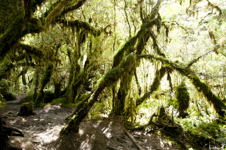 enchanted: Enchanted Forest - Queulat National Park - Chile