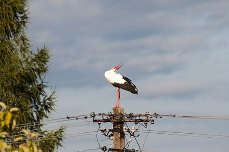 giver: Stork - Poland