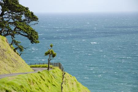 port jackson: Coastal Road - Port Jackson - New Zealand
