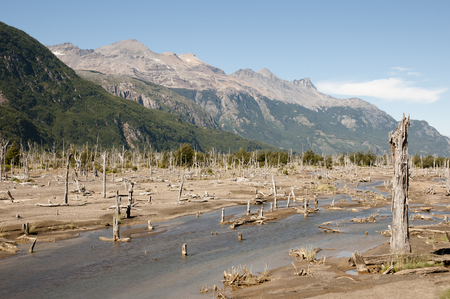 hudson: Dead Forest from Eruption of Hudson Volcano - Chile Stock Photo