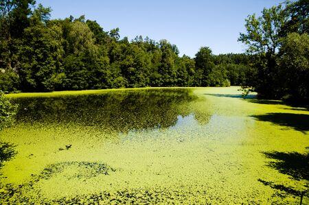 algae: Green Algae Lake Stock Photo
