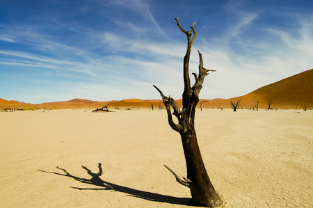 salt marsh: Deadvlei Acacia Tree - Sossusvlei - Namibia Stock Photo