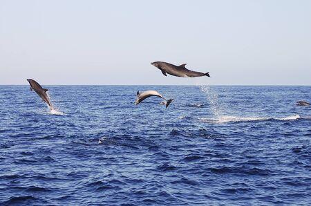 Delfínes de salto - Galápagos - Ecuador