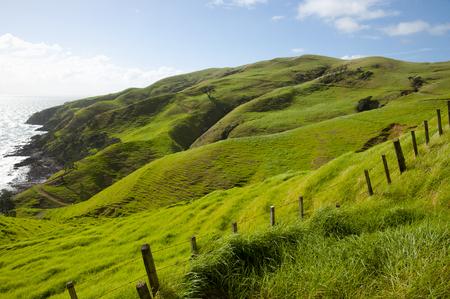 port jackson: Sheep Pasture - Port Jackson - New Zealand