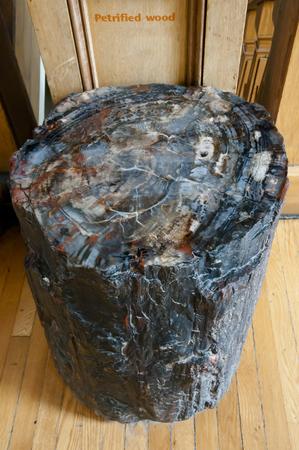 petrified fossil: Petrified Wood