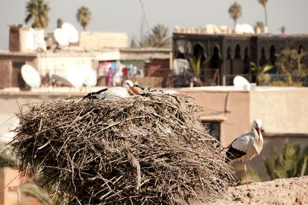 marrakesh: Storks in Nest - Marrakesh - Morocco Stock Photo