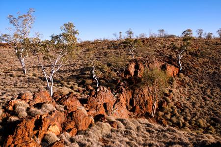 outback australia: Spinifex Plants - Outback Australia