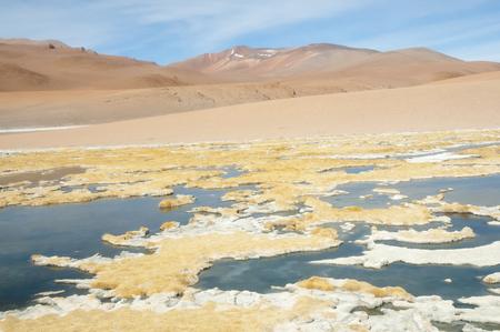 high plateau: The Altiplano - Chile