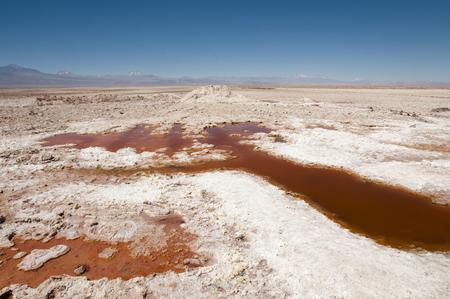 birds desert: Chaxa Lagoon - Chile