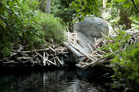 ビーバーのダム 写真素材