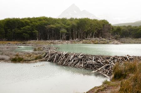 tierra: Beaver Dam - Tierra Del Fuego - Argentina