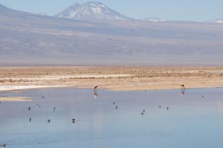 lagoon: Chaxa Lagoon - Chile