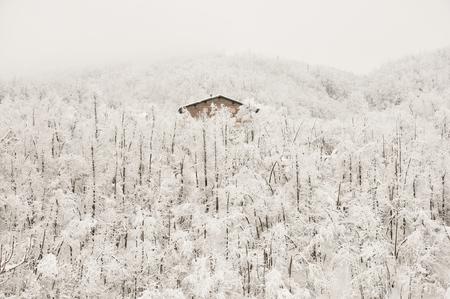 Frosty Wooden Cabin