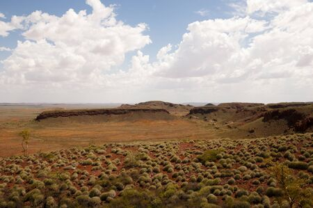 the outback: Spinifex Plants - Outback Australia