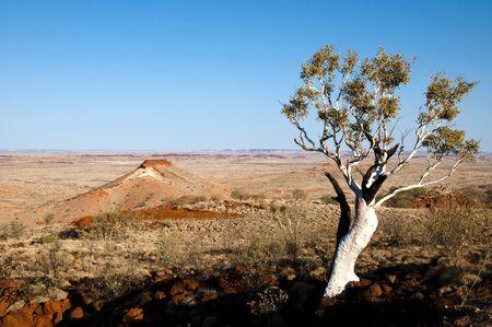 outback australia: Eucalyptus Tree - Outback Australia Stock Photo