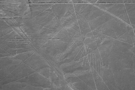 condor: The Condor - Nasca Lines - Peru
