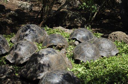 galapagos: Giant Tortoises - Galapagos - Ecuador