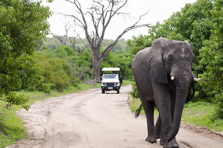 chobe national park: Elephant - Chobe National Park - Botswana