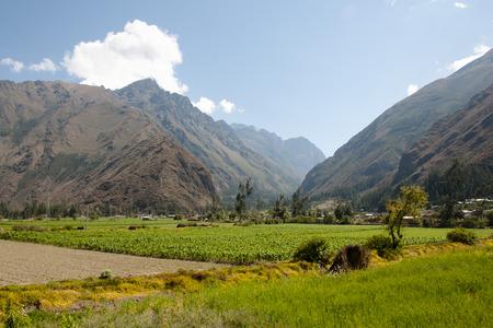 urubamba valley: Corn Plantations - Urubamba Valley - Peru