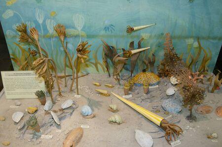 devonian: Prehistoric Sea Bottom Life