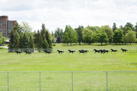 RCMP Horses in Training