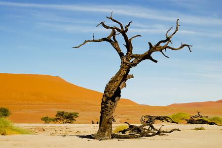 vlei: Deadvlei Acacia Tree - Sossusvlei - Namibia Stock Photo