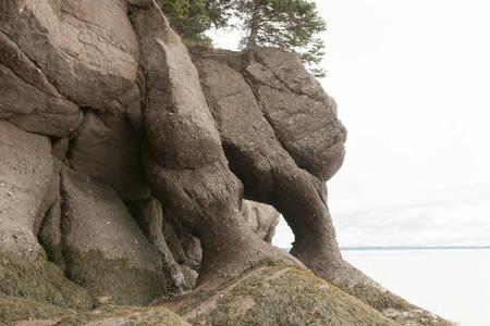 conglomerate: Hopewell Rocks - New Brunswick - Canada