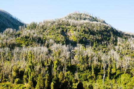 desert ecosystem: Chaiten Volcano Deforestation - Chile Stock Photo