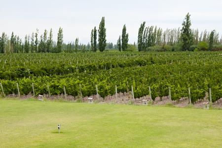 Vineyard - Mendoza - Argentina Stock Photo