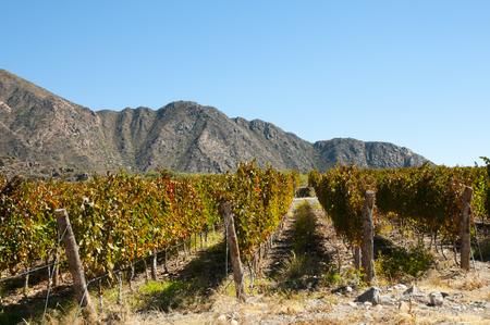 Vineyard - Cafayate - Argentina Stock Photo