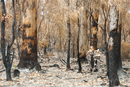Bush Fire Trees - Australia Stock Photo