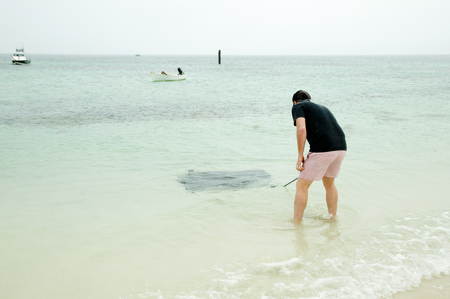 Stingray - Hamelin Bay - Western Australia 版權商用圖片